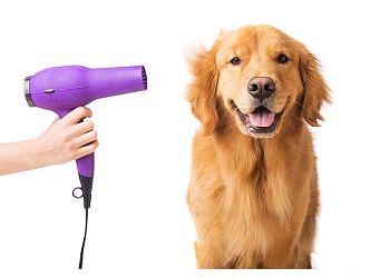 A1k9 Dog Grooming