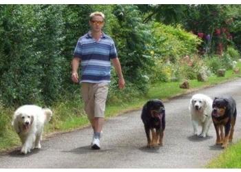 About Turn Dog Training