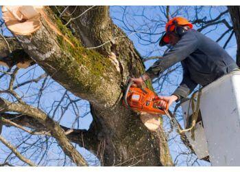 Albany Tree Care