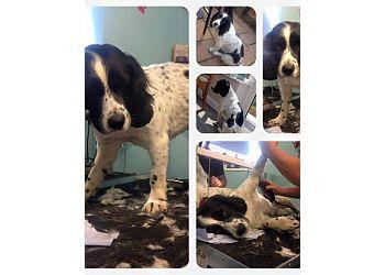 Appley Bridge Dog Grooming