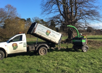 Arborescence Tree Care