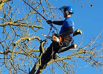 Arborfield Tree Care