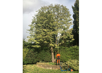 Arborline Tree Care