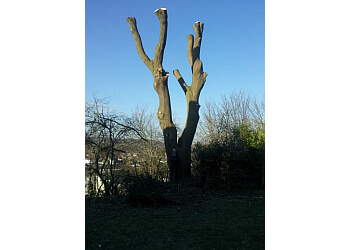 Arborwood Tree Care