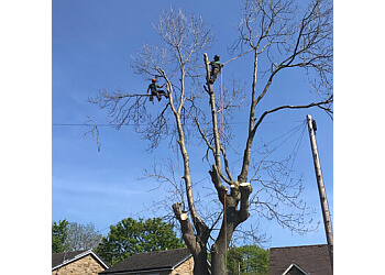 Bardsey Tree Services
