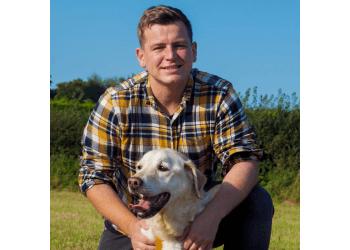 Bark Play Teach Dog Training