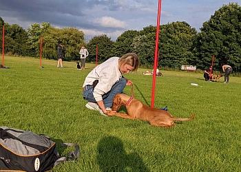 Barkleys Dog Training Academy
