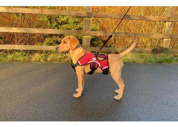 Big Bark Dog Walking