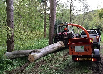 Bilsdale Tree Services