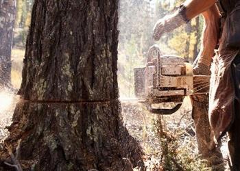 Border Tree Care
