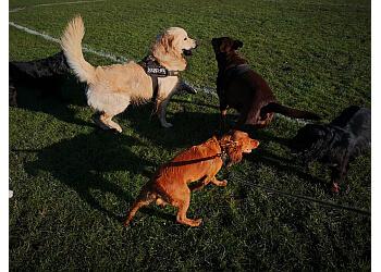 Bradford Dog Walkers