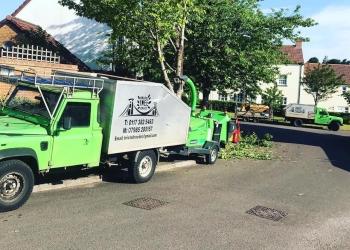 Bristol Tree Services
