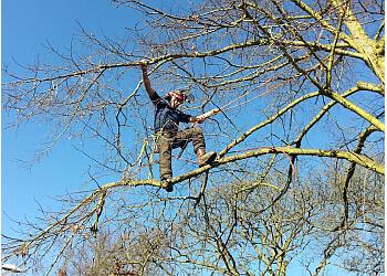 Budding - Professional Tree Care