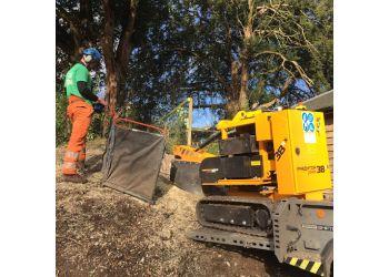 C&D Trees