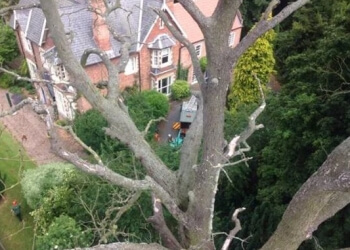 CREWE TREE & STUMP REMOVALS/CREWE TREE SURGEON