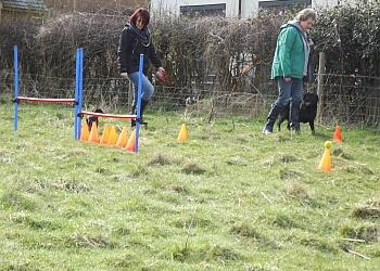 Dog Training Classes Macclesfield