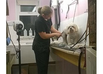 Canine Designs Professional Dog Grooming