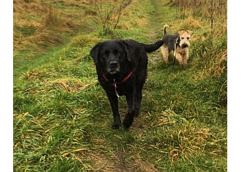 Castleshaw Dog Walking and Pet Services