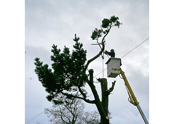 Christopher Hoare Tree Services Ltd.