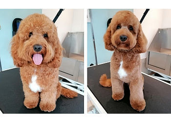 3 Best Pet Grooming In Norwich Uk Top Picks January 2019