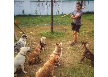 Clever Canines Dog Training