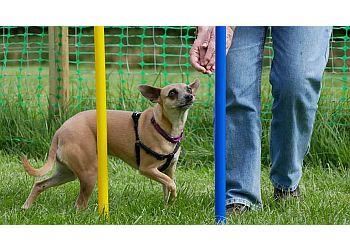 ClickRight Dog Training