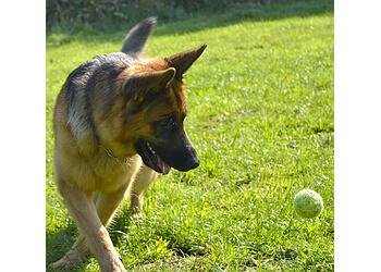 Diamond Dog Behaviour and Training