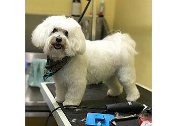 Diamond Dogs Salon