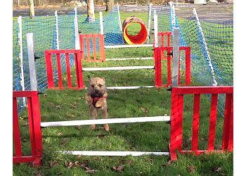 Dog Behaviour Wales