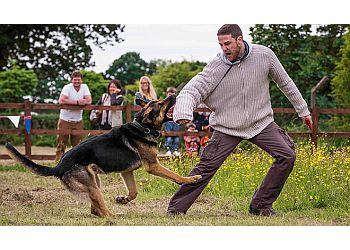 Dog-Training4u
