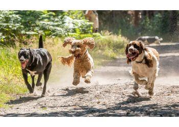 Dog Walking Wokingham