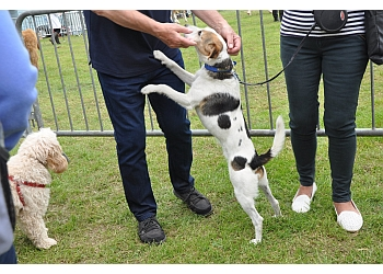 Dogdayz Dog Training