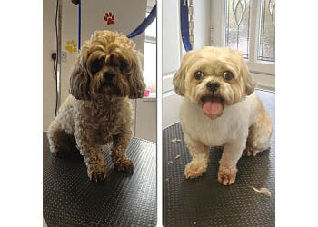 Doggy Styles Dog Grooming Parlour