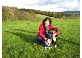 3 Best Dog Walkers In Lancaster Uk Top Picks January 2019