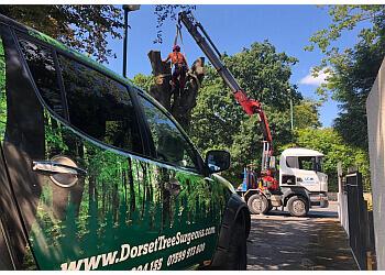 Dorset Tree Surgeons Ltd.
