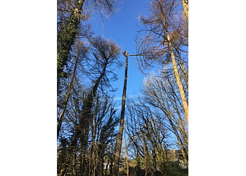 ESA Treecare Ltd