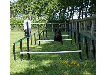 Feaver Pitch Dog Training
