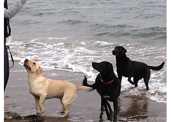 Fetch Fife Dog Walking Services