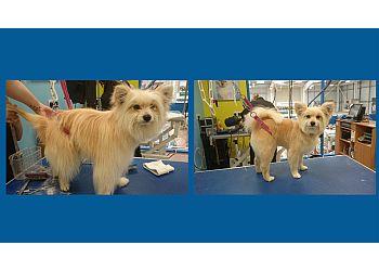 Flawless Fur mobile dog grooming