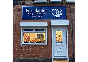 Fur Babies Dog Grooming