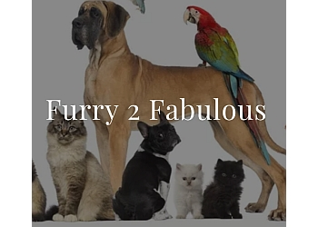 Furry 2 Fabulous