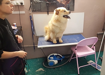 Gay Dogs Grooming Salon