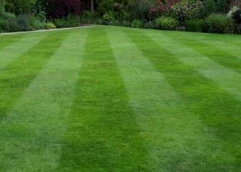 Grass & Garden