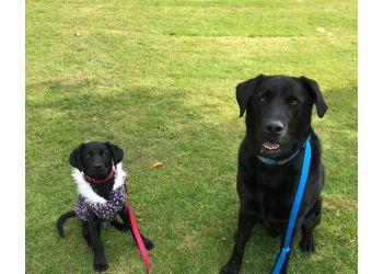 Happy 4 Pawz