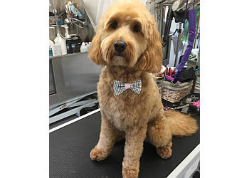 Hollywoof Dog Grooming Parlour
