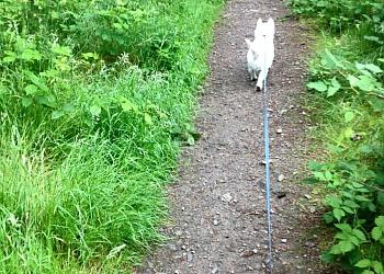 Hyper Hounds dog walking