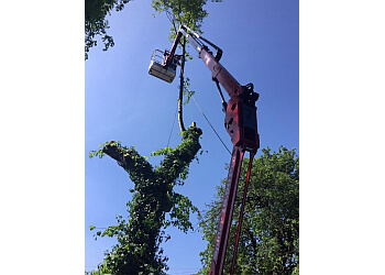J Gaffney Tree Hedge & Stump Services