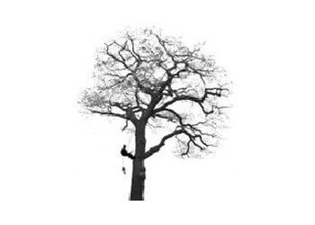 J.J.L Tree 's  Ltd
