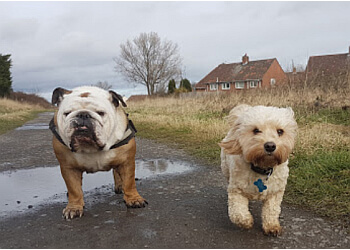 Jaspers Walking, Boarding & Daycare