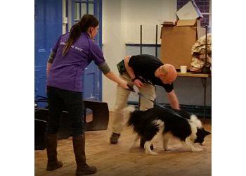 Just Pet Dogs  Training & Behaviour